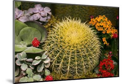 New York City, NY, USA. Floral Displays for Spring-Julien McRoberts-Mounted Photographic Print