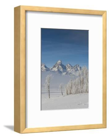 Rimed Cottonwoods and Tetons from Antelope Flats Road-Howie Garber-Framed Photographic Print
