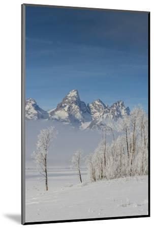 Rimed Cottonwoods and Tetons from Antelope Flats Road-Howie Garber-Mounted Photographic Print