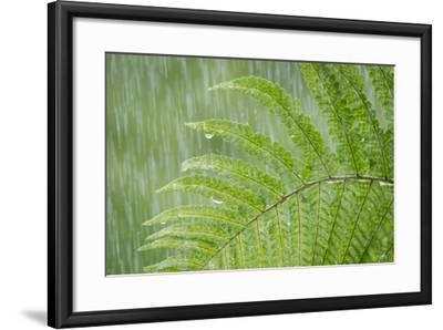 USA, Washington State, Seabeck. Fern in Rainfall-Don Paulson-Framed Photographic Print