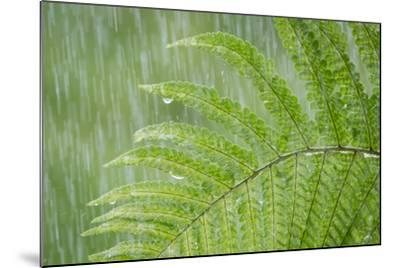 USA, Washington State, Seabeck. Fern in Rainfall-Don Paulson-Mounted Photographic Print