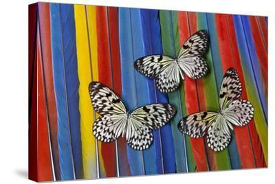 Paper Kite Tropical Butterfly on Macaw Tail Feather Design-Darrell Gulin-Stretched Canvas Print