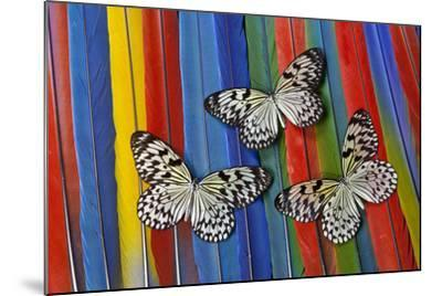 Paper Kite Tropical Butterfly on Macaw Tail Feather Design-Darrell Gulin-Mounted Photographic Print