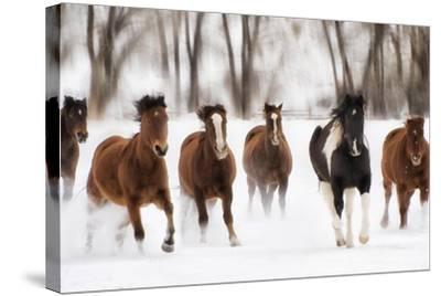 Snow Run I-PHBurchett-Stretched Canvas Print