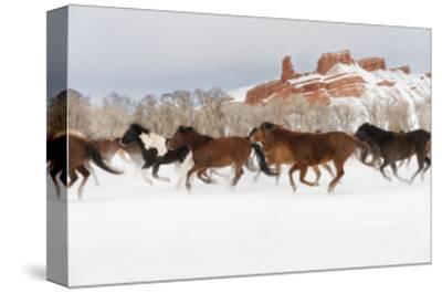 Snow Run III-PHBurchett-Stretched Canvas Print