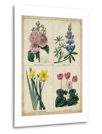 Botanical Grid III-Benjamin Maund-Metal Print