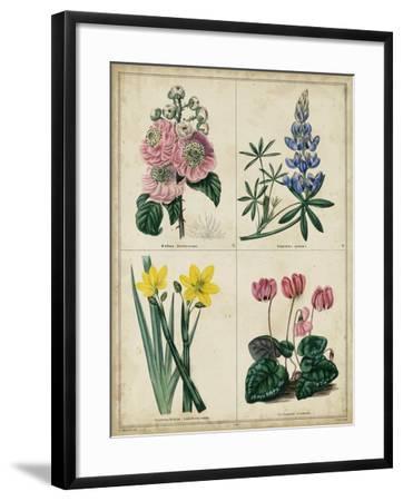 Botanical Grid III-Benjamin Maund-Framed Art Print