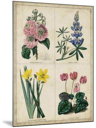 Botanical Grid III-Benjamin Maund-Mounted Art Print