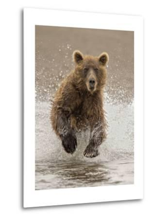 Bears at Play II-PHBurchett-Metal Print