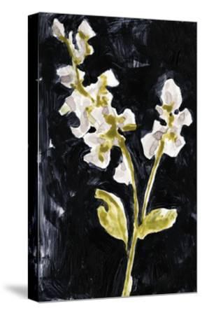 Midnight Phlox I-Jennifer Goldberger-Stretched Canvas Print