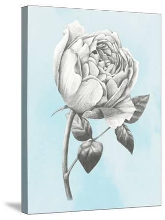 Graphite Rose II-Grace Popp-Stretched Canvas Print