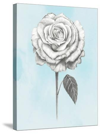 Graphite Rose III-Grace Popp-Stretched Canvas Print