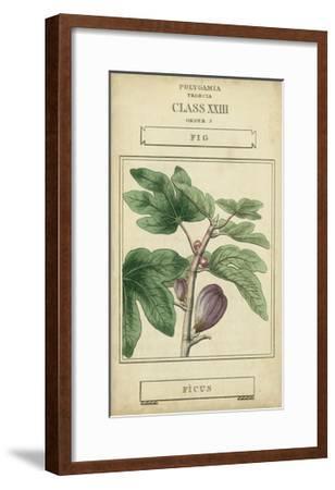 Linnaean Botany VI-Vision Studio-Framed Art Print
