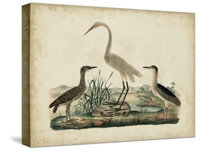 Great White Heron and Night Heron-Friedrich Strack-Stretched Canvas Print
