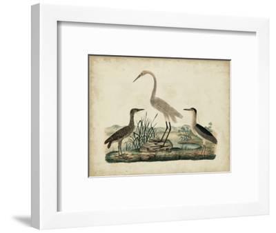 Great White Heron and Night Heron-Friedrich Strack-Framed Art Print