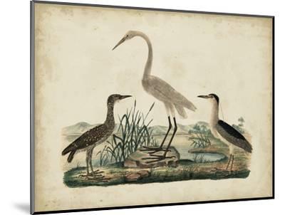 Great White Heron and Night Heron-Friedrich Strack-Mounted Art Print