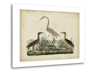 Great White Heron and Night Heron-Friedrich Strack-Metal Print