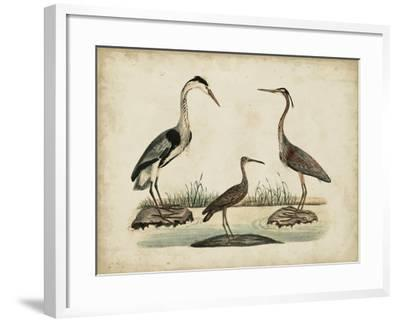 Common Heron and Crested Purple Heron-Friedrich Strack-Framed Art Print