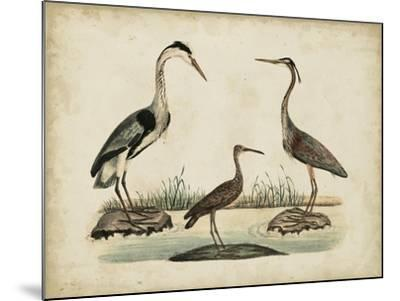 Common Heron and Crested Purple Heron-Friedrich Strack-Mounted Art Print