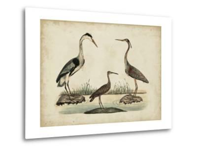 Common Heron and Crested Purple Heron-Friedrich Strack-Metal Print