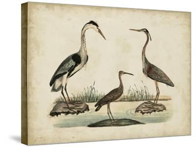 Common Heron and Crested Purple Heron-Friedrich Strack-Stretched Canvas Print