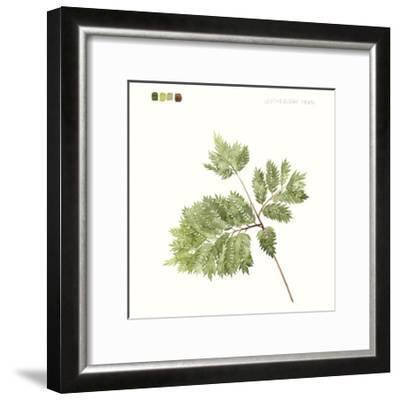 Watercolor Leaf Study II-Grace Popp-Framed Art Print