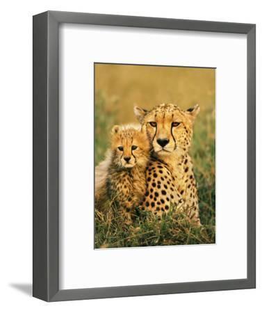 Cheetah and Cub, Masai Mara Reserve, Kenya-Frans Lanting-Framed Photographic Print