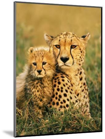 Cheetah and Cub, Masai Mara Reserve, Kenya-Frans Lanting-Mounted Photographic Print