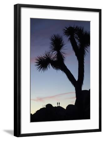 Late Rays of Light at Sunset in Joshua Tree National Park, California-Bill Hatcher-Framed Photographic Print