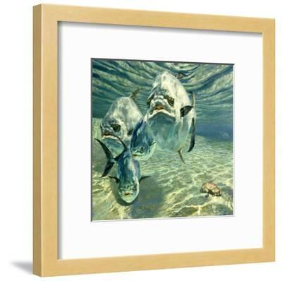 Four Permit and Coral Crab, 1987-Stanley Meltzoff-Framed Giclee Print
