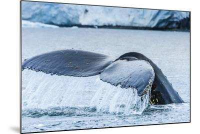 A Humpback Whale Tail Near Paradise Harbor, Antarctica-Ralph Lee Hopkins-Mounted Photographic Print