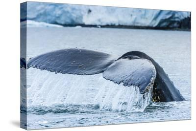 A Humpback Whale Tail Near Paradise Harbor, Antarctica-Ralph Lee Hopkins-Stretched Canvas Print