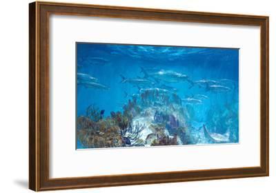 Tarpon at Looe Key-Stanley Meltzoff-Framed Giclee Print