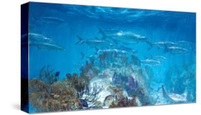 Tarpon at Looe Key-Stanley Meltzoff-Stretched Canvas Print
