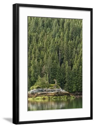 Algae on a Rock, Exposed by Low Tide-Cesare Naldi-Framed Photographic Print