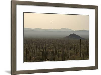 A Border Patrol Helicopter Looking for Illegal Activity in Organ Pipe Cactus National Monument-Bill Hatcher-Framed Photographic Print