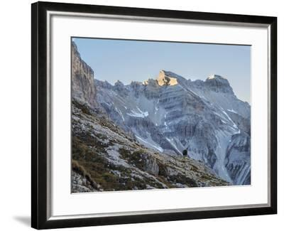 A Chamois Antelope Goat, Rupicapra Rupicapra, Pauses on the Edge of a Cliff-Ulla Lohmann-Framed Photographic Print