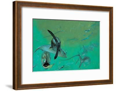 Bluefish in Tangle under the Head Boats, Rhode Island,' 1974-Stanley Meltzoff-Framed Giclee Print