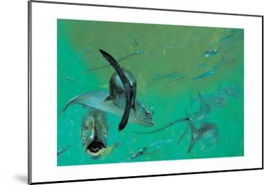 Bluefish in Tangle under the Head Boats, Rhode Island,' 1974-Stanley Meltzoff-Mounted Giclee Print