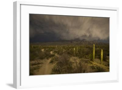 A Hiking Trail in Saguaro National Park During Approaching Storm Clouds Lit by Tucson Lights-Bill Hatcher-Framed Photographic Print