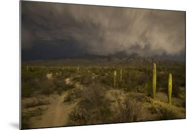 A Hiking Trail in Saguaro National Park During Approaching Storm Clouds Lit by Tucson Lights-Bill Hatcher-Mounted Photographic Print