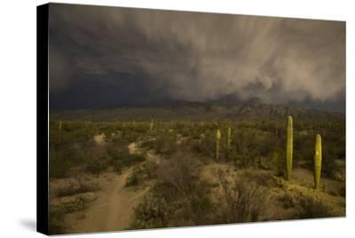 A Hiking Trail in Saguaro National Park During Approaching Storm Clouds Lit by Tucson Lights-Bill Hatcher-Stretched Canvas Print