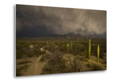 A Hiking Trail in Saguaro National Park During Approaching Storm Clouds Lit by Tucson Lights-Bill Hatcher-Metal Print