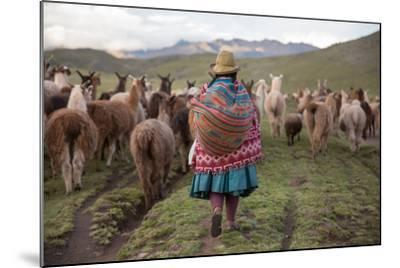 A Quechua Woman Herding Llamas, Alpacas, and Sheep Back to Town from Grazing in the Mountains-Erika Skogg-Mounted Photographic Print