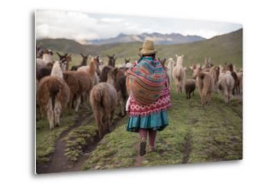 A Quechua Woman Herding Llamas, Alpacas, and Sheep Back to Town from Grazing in the Mountains-Erika Skogg-Metal Print
