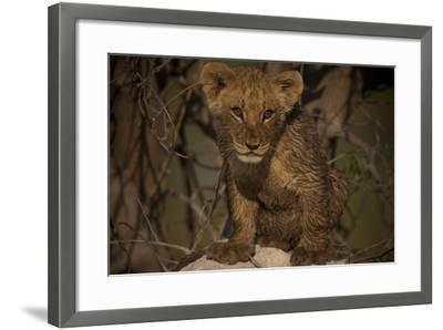 Portrait of a Lion Cub Sitting on Top of an Anthill-Beverly Joubert-Framed Photographic Print