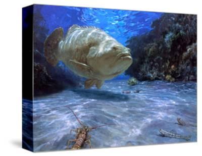 The Great Presence, 2001: a Massive Goliath Grouper Cruises its Rocky Habitat in Search of Food-Stanley Meltzoff-Stretched Canvas Print