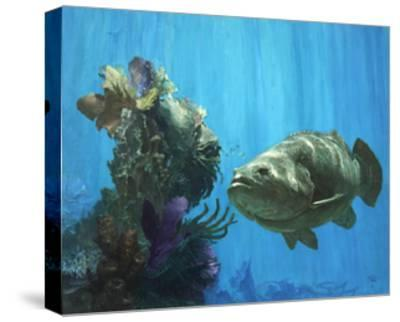 An Atlantic Goliath Grouper in 'Secrets of Arcimboldo's Reef, 2000'-Stanley Meltzoff-Stretched Canvas Print