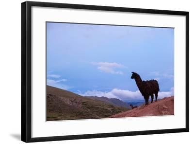 Two Llamas Stand in the Mountains of Peru-Erika Skogg-Framed Photographic Print
