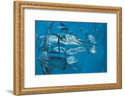Two Striped Marlin and Pompano, Cabo San Lucas: Striped Marlin Work as a Team to Round Up Pompano-Stanley Meltzoff-Framed Giclee Print